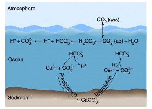 diagram of calcium cycle atomic diagram of calcium western arctic log rsaquo what is ocean acidification